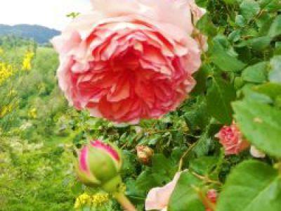 Il Giardino di Pimpinella image
